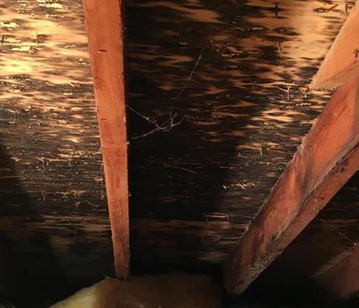 Attic Mold Remediation in Valdese Before