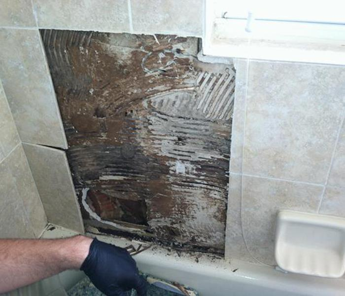Mold Damage- Hildebrand Bathroom