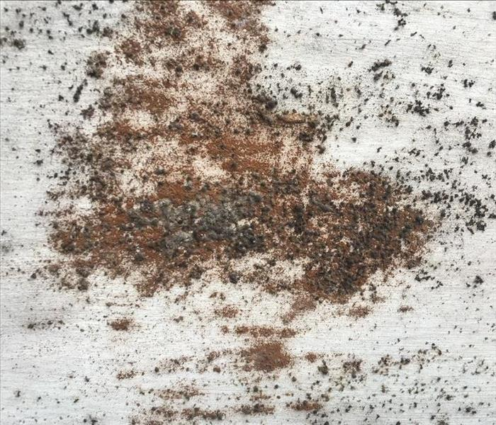 Mold Remediation 3 Factors That Might Have Caused Your Home's Mold Growth