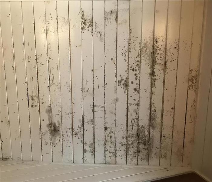 Mold Remediation 3 Steps to Take if You Have Mold