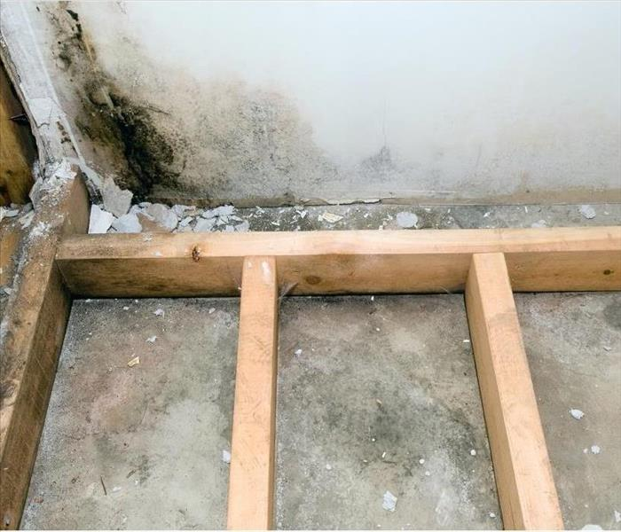 Mold Remediation Stopping Mold Damage in Bridgewater