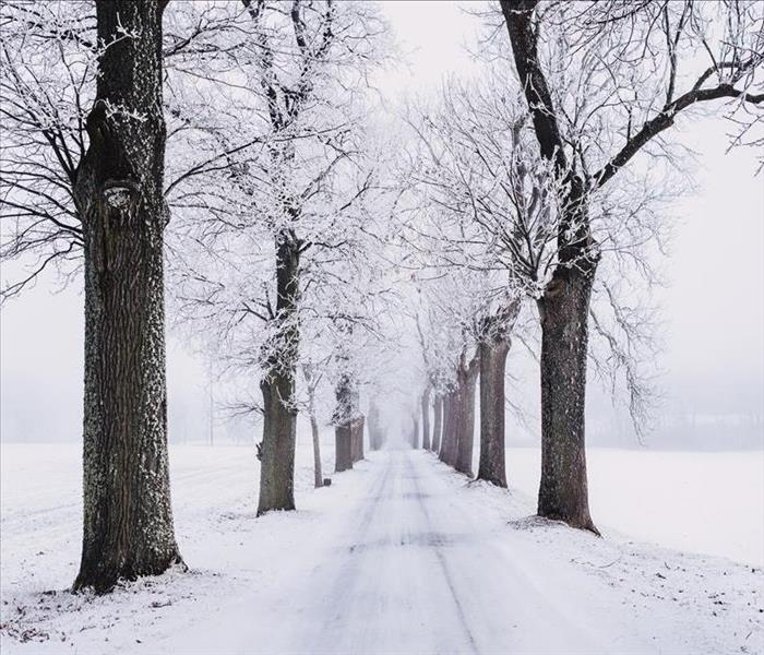 Snow-covered trees line both sides of a snowy road