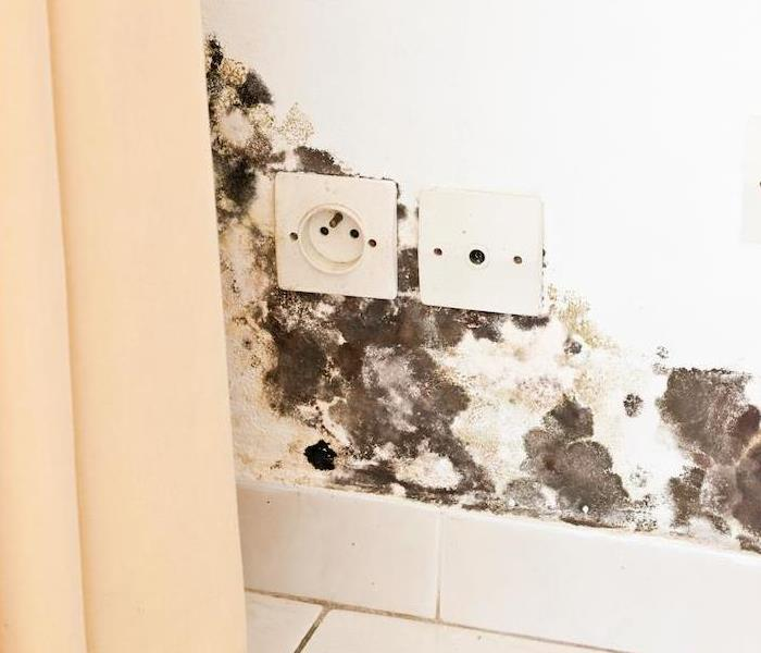 Mold Remediation Mold Damage Remediation Services Available For Your Morganton Area Home